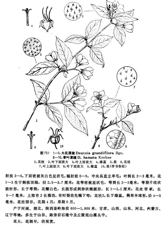 ABUIABAEGAAg  TchQYogJbL7wUwpgQ46QU - 中国植物志合集